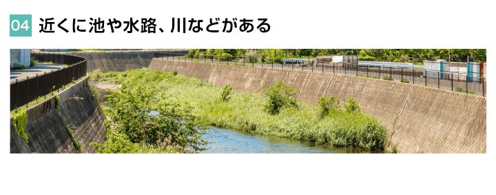 近くに池や水路、川などがある