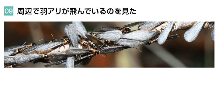 周辺で羽アリが飛んでいるのを見た
