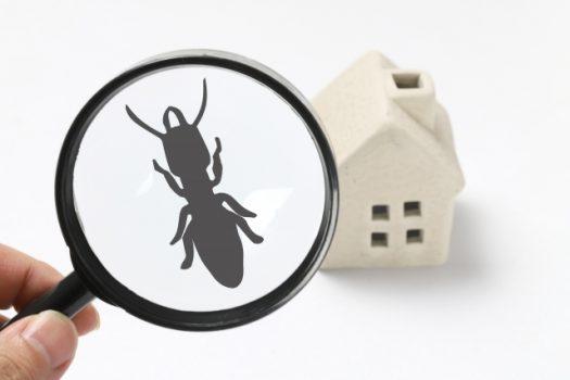 羽アリとシロアリ、クロアリは違うもの?発生原因と予防策をご紹介