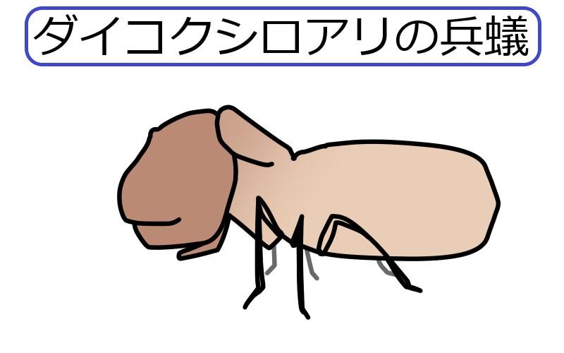 ダイコクシロアリの兵蟻の絵