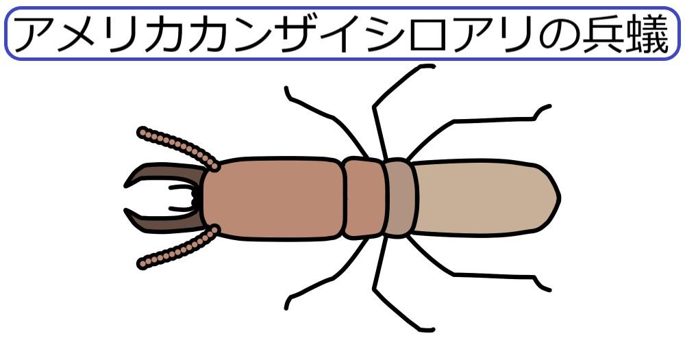 アメリカカンザイシロアリの兵蟻の絵