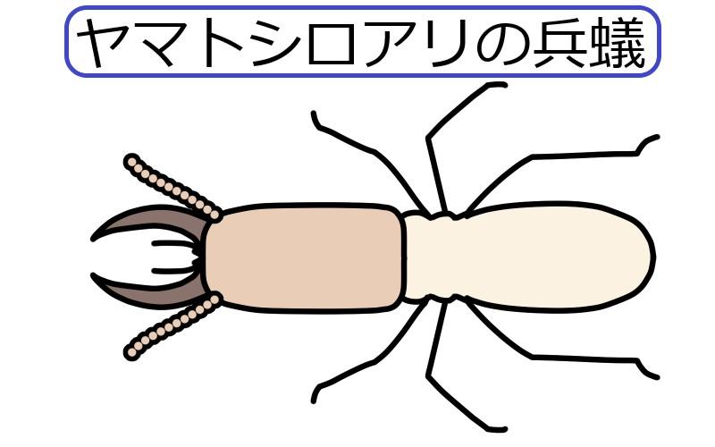 ヤマトシロアリの兵蟻の絵